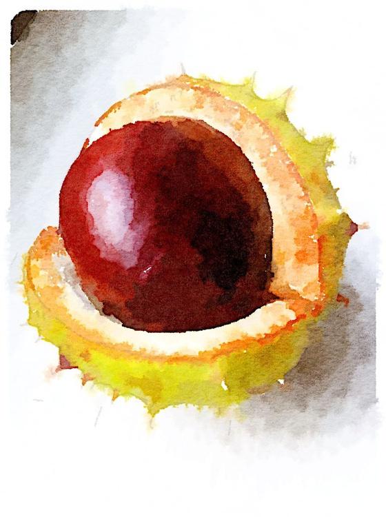 Horsechestnut Fruit - 8x10 Print - Image 0