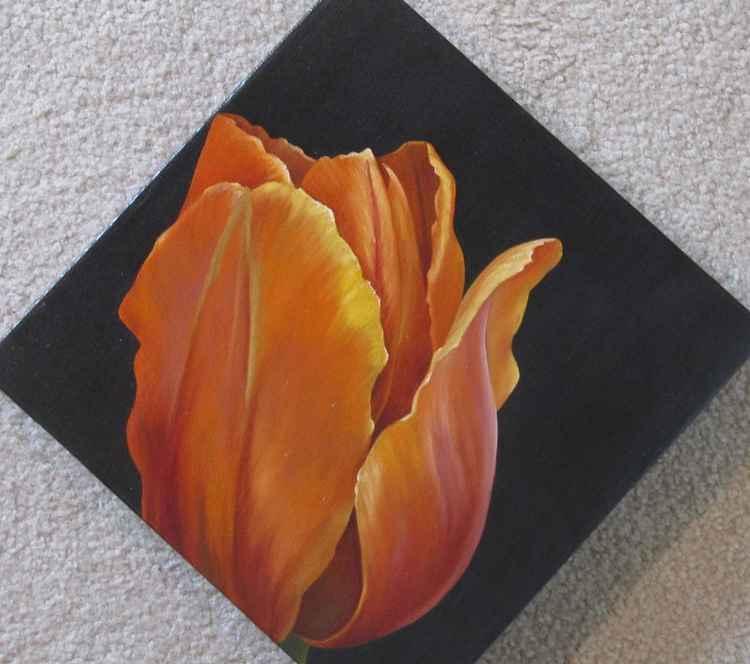 Generaal de Wet Tulip