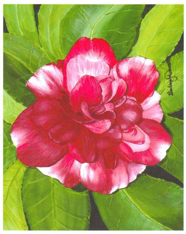 """December Bloom"" -"