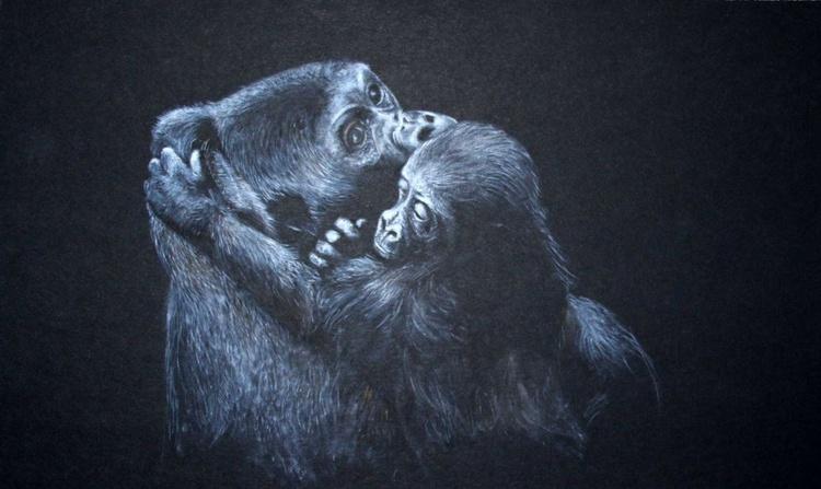 Western Lowland Gorillas - Image 0