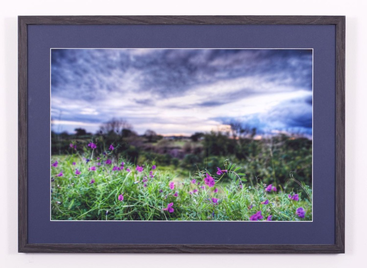 Wildflowers - Hunter Valley Australia - Image 0