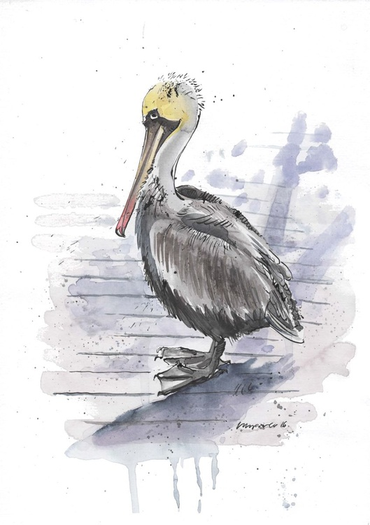 Brown Pelican - Daily Bird #06 - Image 0