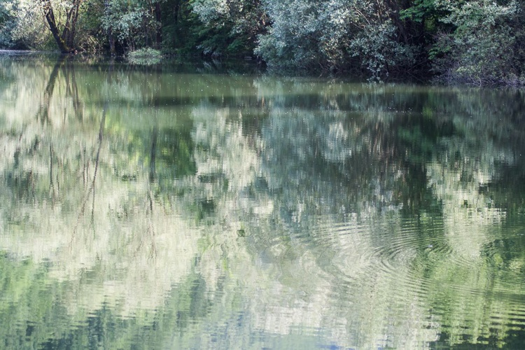 green reflections - Image 0