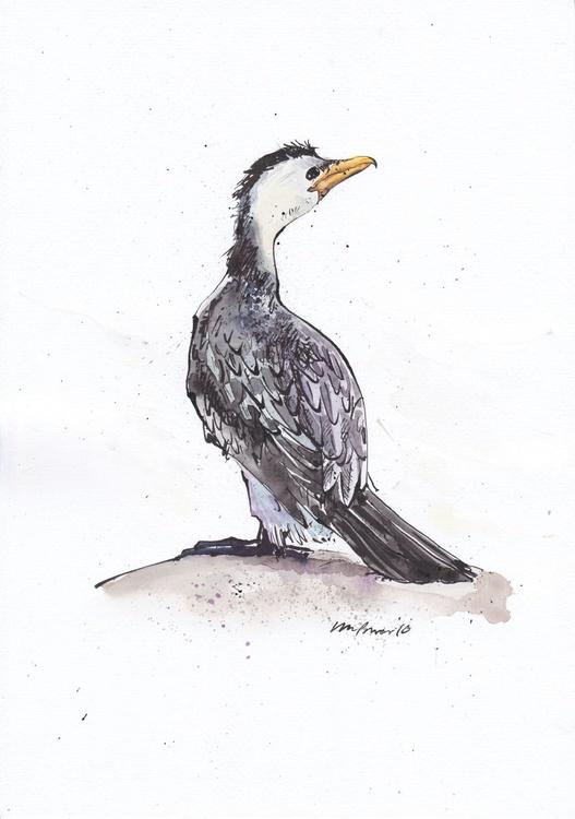 Little Pied Cormorant - Daily Bird #01 - Image 0