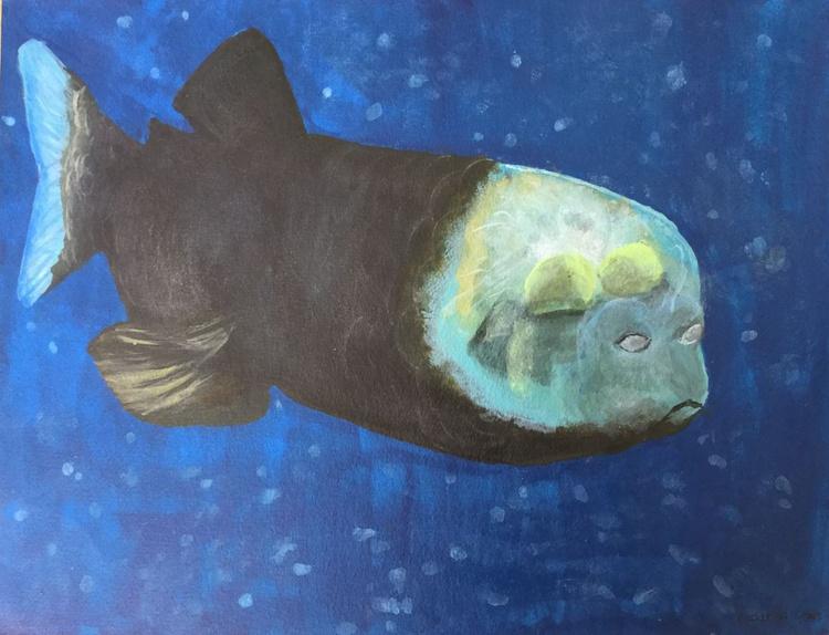 Barreleye fish - Image 0