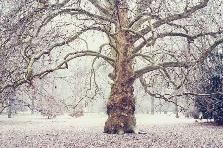 Enchanted by Winter  (Ltd Edition of only 25 Fine Art Giclee Prints from an original photograph)