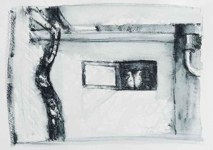 Birds in a window -