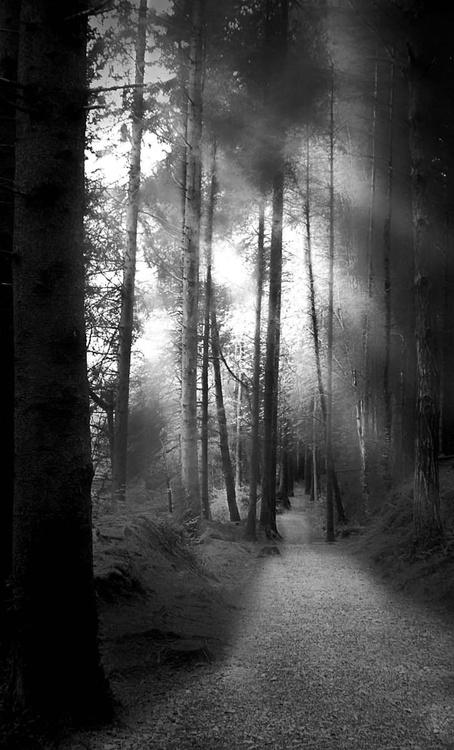 LIGHT AND DARK - Image 0