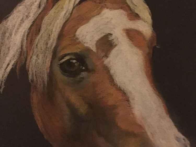 Chestnut Welsh Section C Pony
