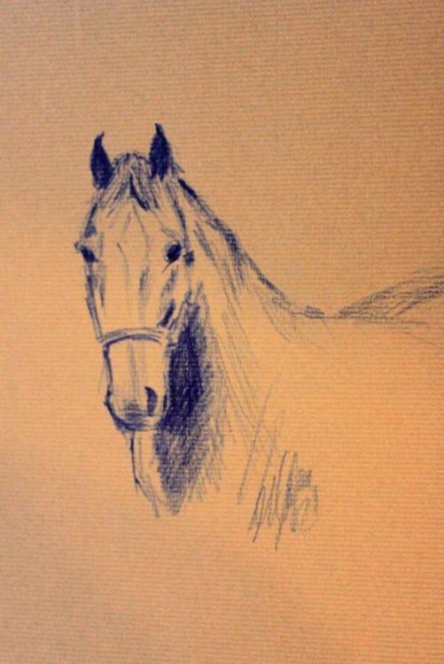 Beauty of horse - Image 0