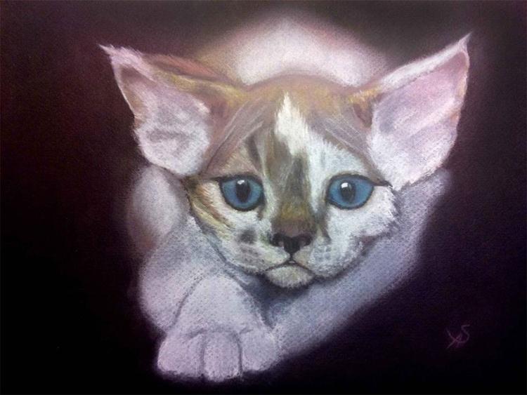 Cat named Usher - Image 0