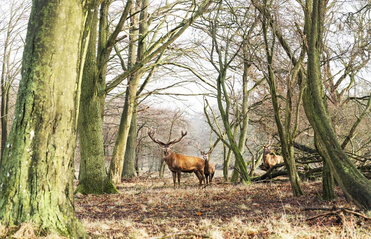 THE STAGS - Image 0