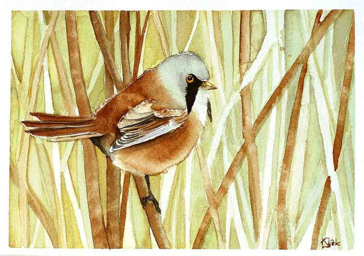 bearded tit, Watercolor painting -