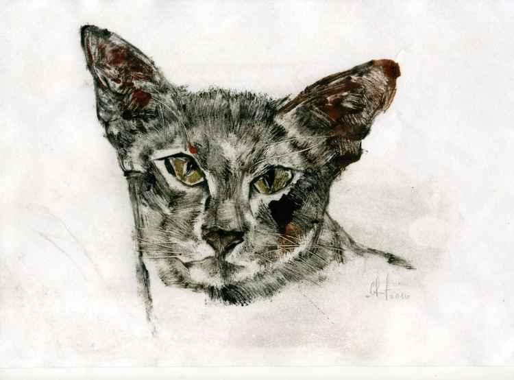 Cat_04 -