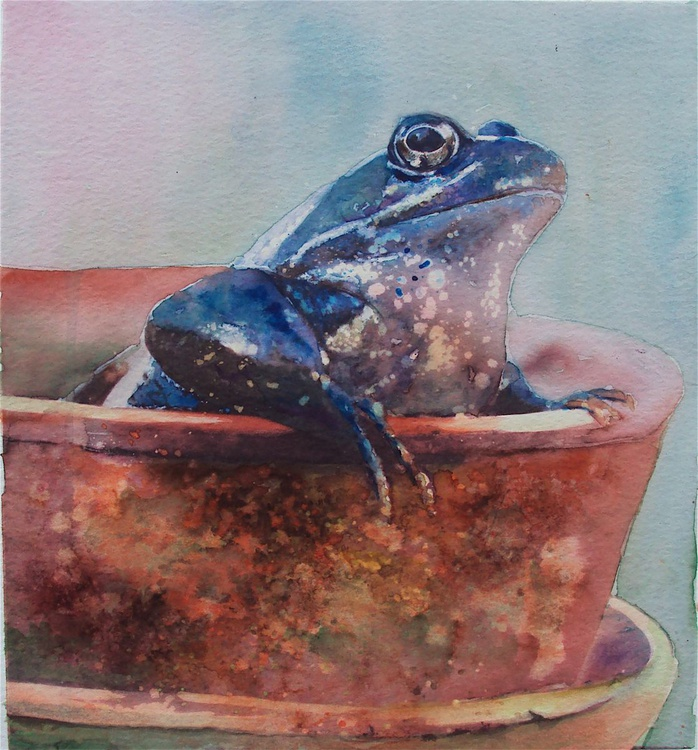 Frog in a Flower Pot - Image 0