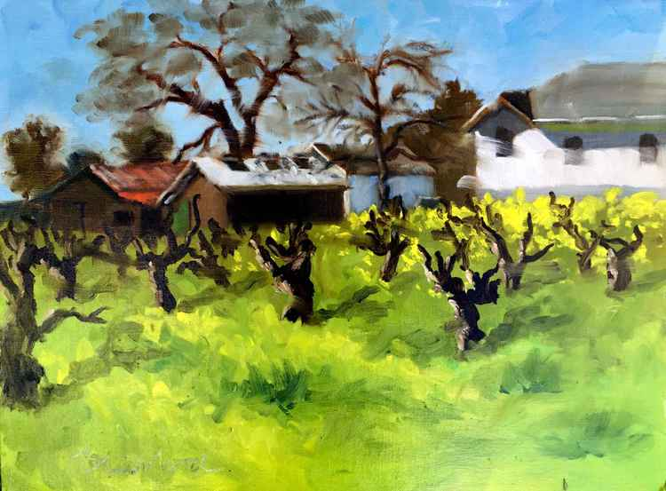Mustard, Barns, and Old Vines -