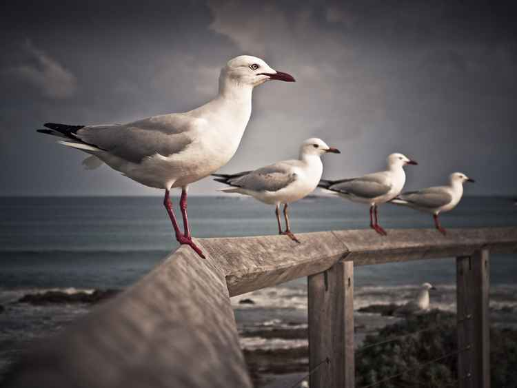 Seagull#4 -