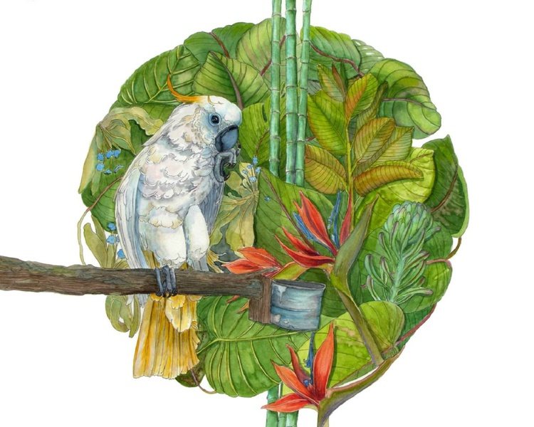 cockatoo in the jungle - Image 0