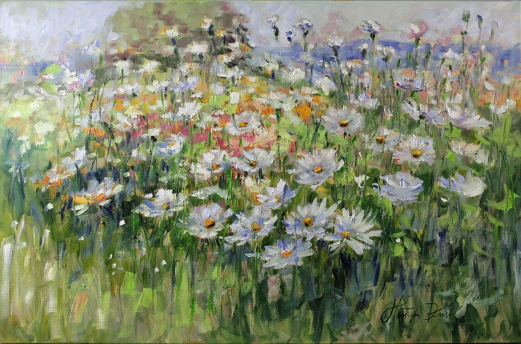 Camomiles on meadow - Image 0