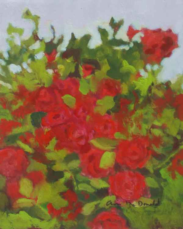 Wild Red Roses by St. Phillips