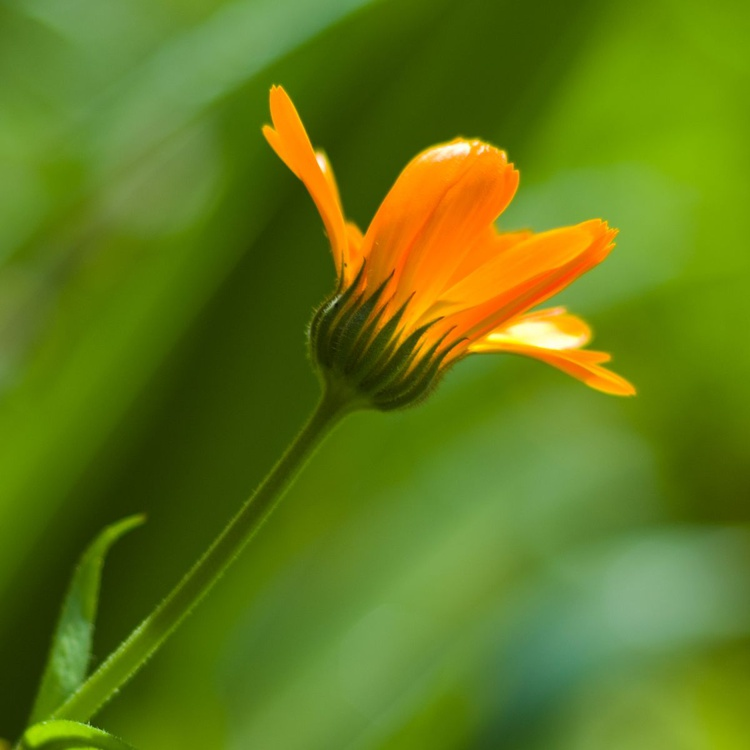 Orange & Green - Image 0