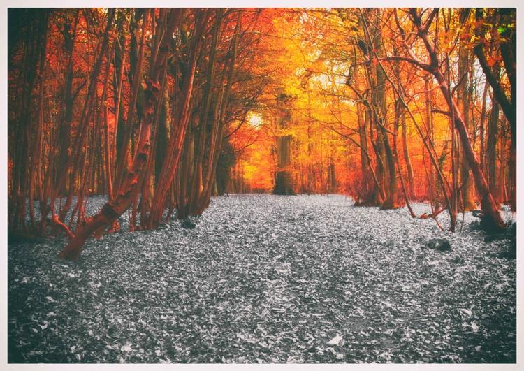 Orange Light - Image 0