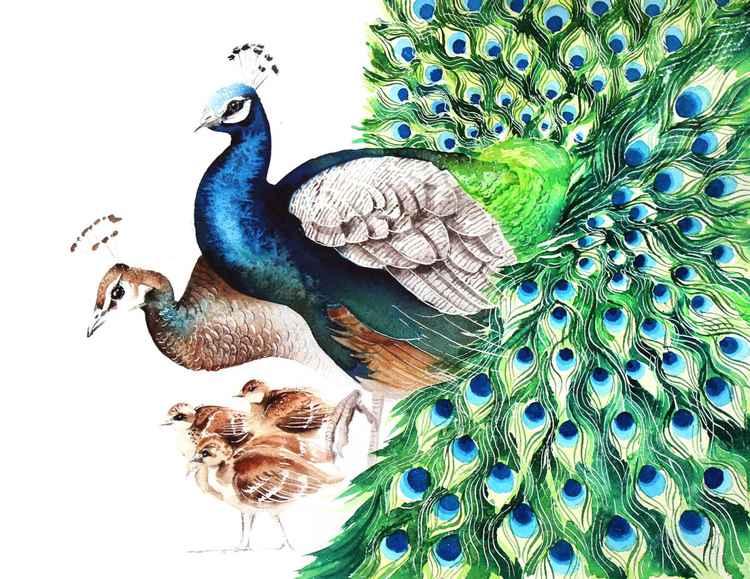 Peacocks family,  bird, birds, animals, wildlife watercolour painting