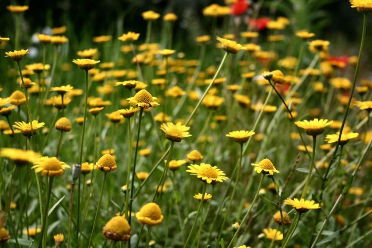 Yellow - Image 0