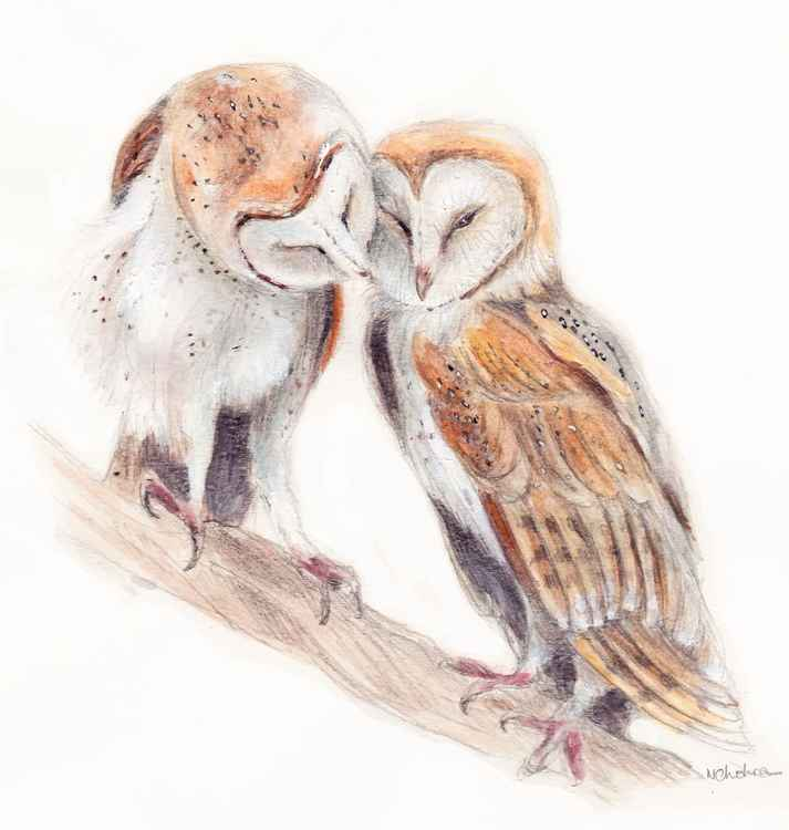 Owls in love -