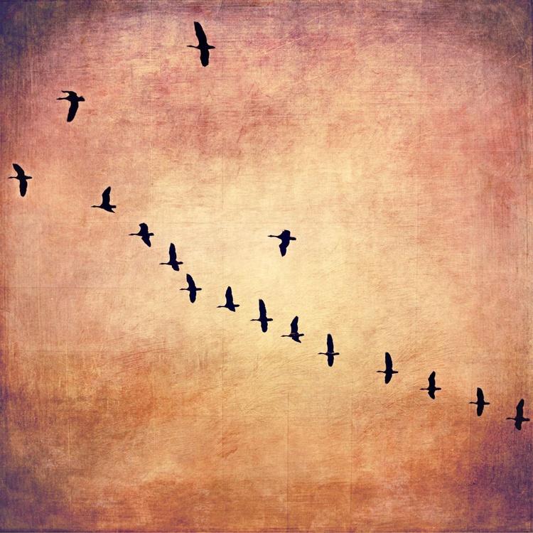 Migration - Image 0