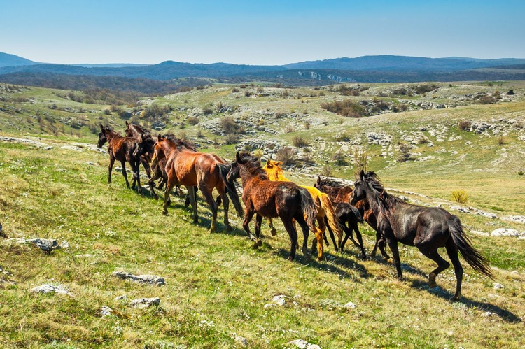 The herd of horses. - Image 0