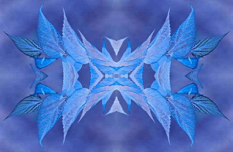Iceni (Blue)