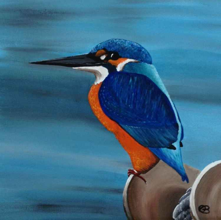 Kingfisher of Brixham Small Limited Edition Print -