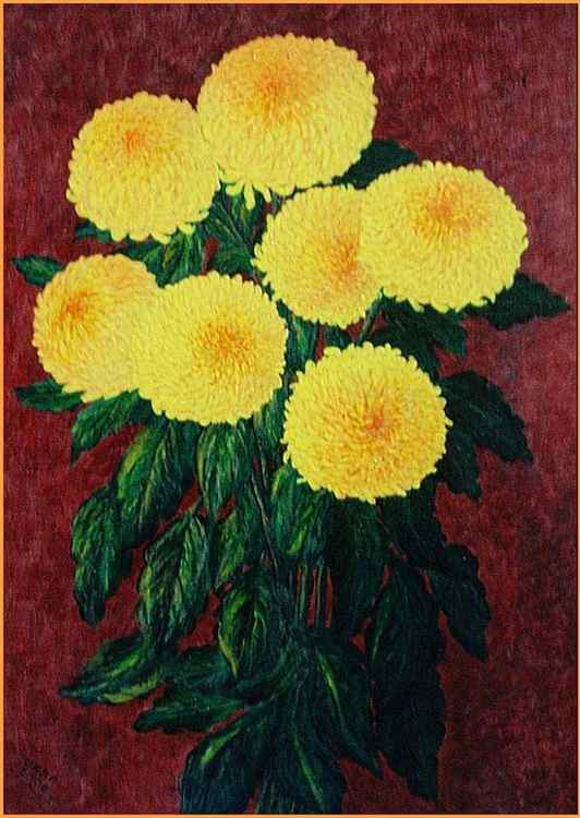 Yellow chrysanthemums ..