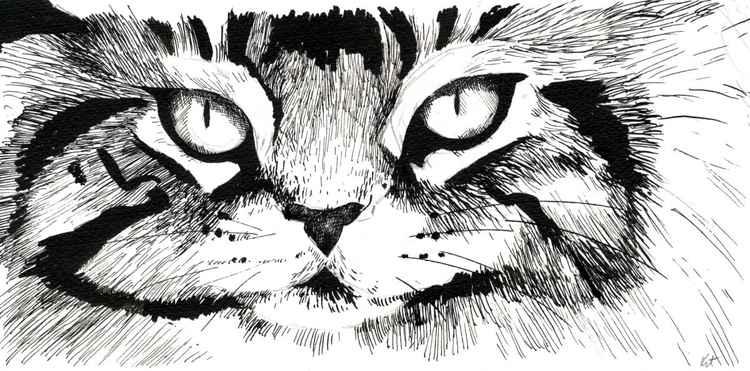 Cat Study 3 -