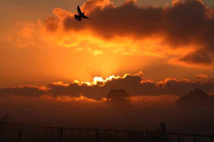 SUNRISE DOVE FLIGHT