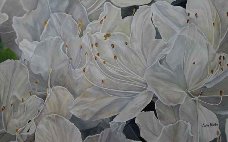 White Azalea -