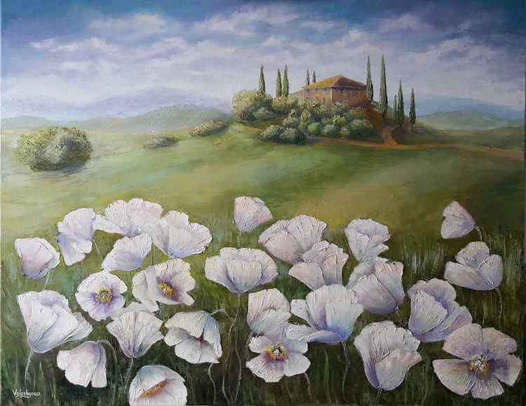 White poppies -