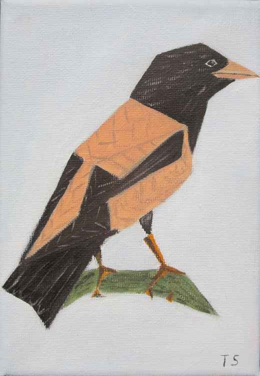 Red-coloured starling