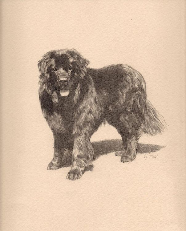 Study of a Newfoundland Dog - Image 0