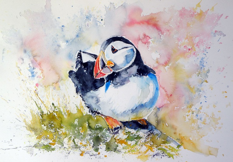 Puffin on stone - Image 0