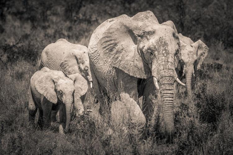 Etosha Elephants I - Image 0