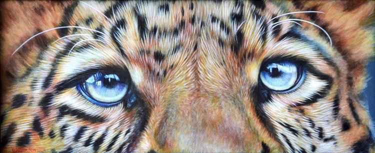 Leopard Eyes -