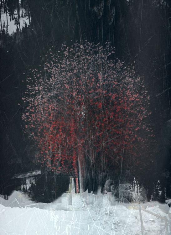 Tree #1 - Image 0