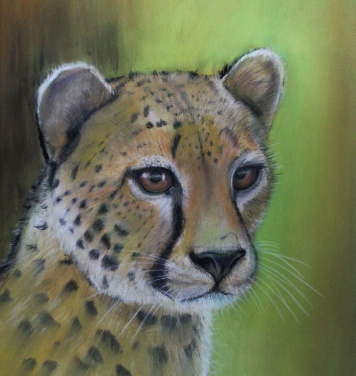 Easily Spotted, framed pastel study of a cheetah - Image 0