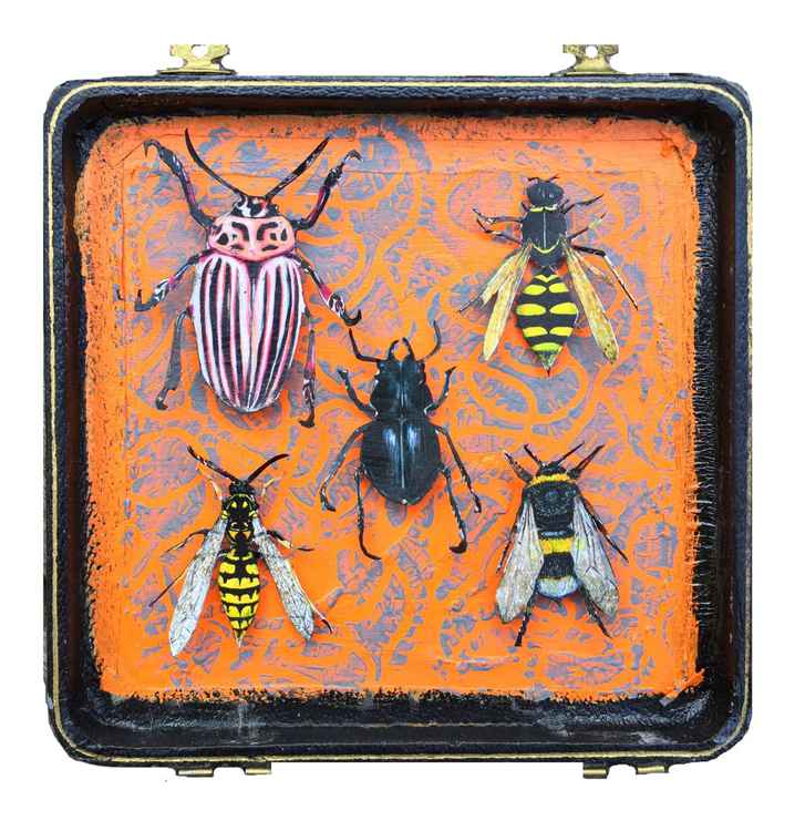 Insect Box 5No15