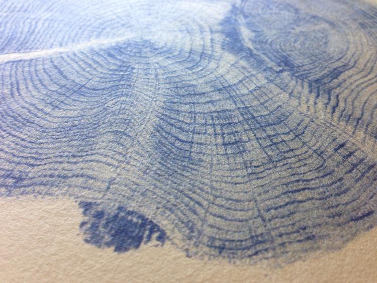 Quercus robur - Image 0