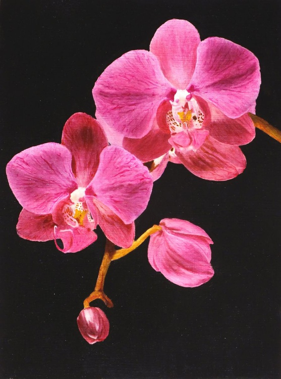 The Orchid - Image 0