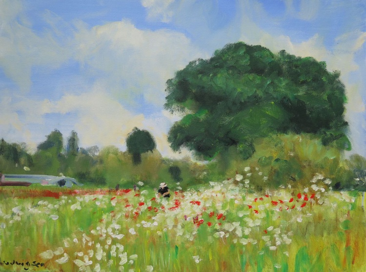 Poppies near York. - Image 0