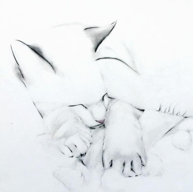 Shy Cat - Image 0